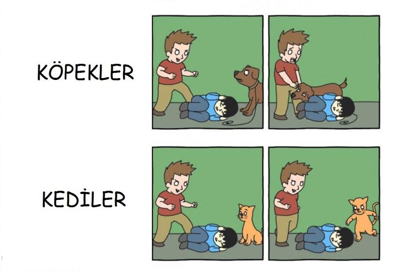 Kedi mi Köpek mi tartışması
